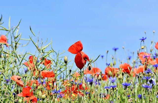 Rendre son jardin plus agréable à voir